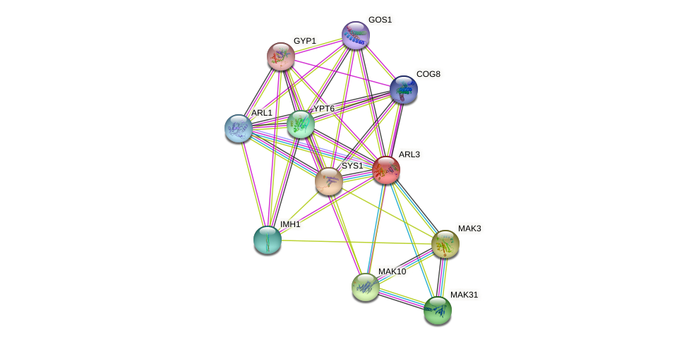 ARL3 protein (Saccharomyces cerevisiae) - STRING interaction network