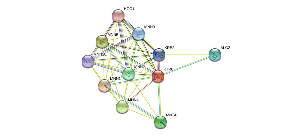 KTR6 protein (Saccharomyces cerevisiae) - STRING interaction network