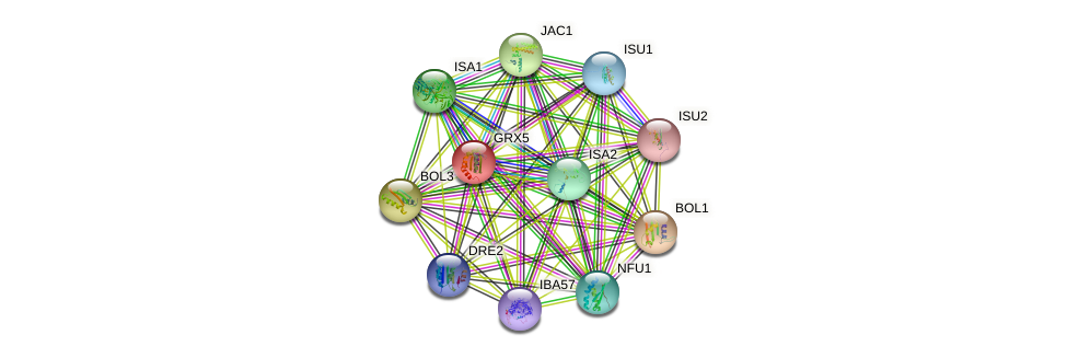 GRX5 protein (Saccharomyces cerevisiae) - STRING interaction network