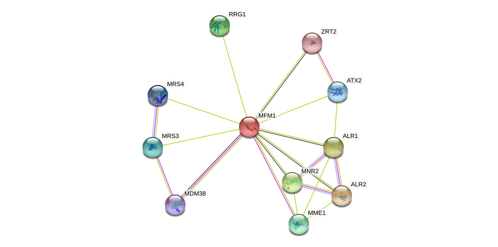 MFM1 protein (Saccharomyces cerevisiae) - STRING interaction network