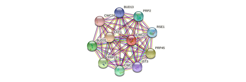 CWC27 protein (Saccharomyces cerevisiae) - STRING interaction network