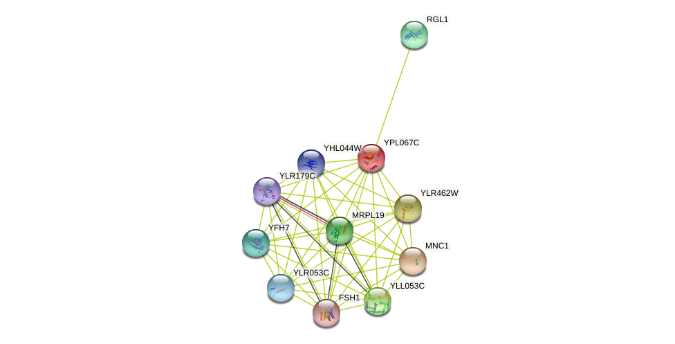 YPL067C protein (Saccharomyces cerevisiae) - STRING interaction network
