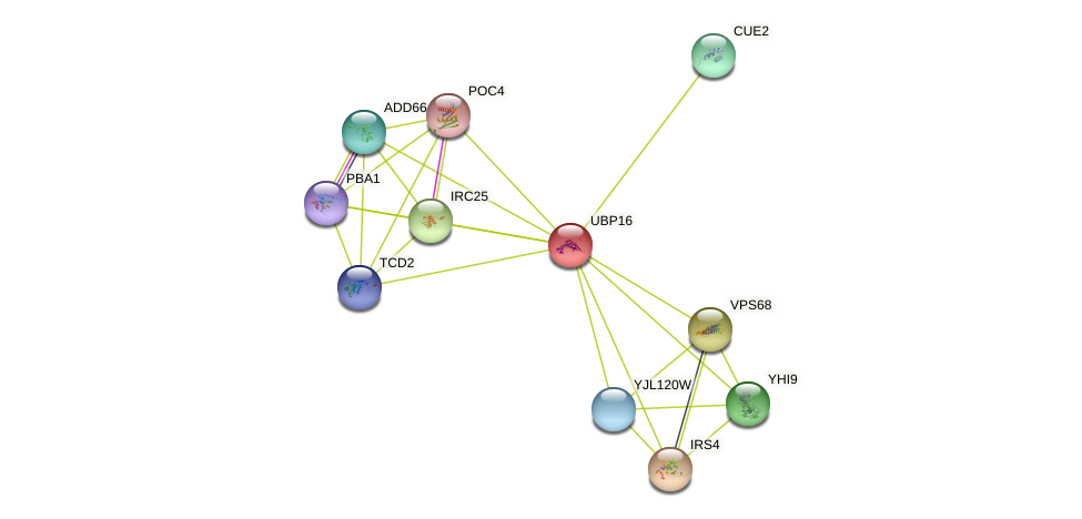 UBP16 protein (Saccharomyces cerevisiae) - STRING interaction network