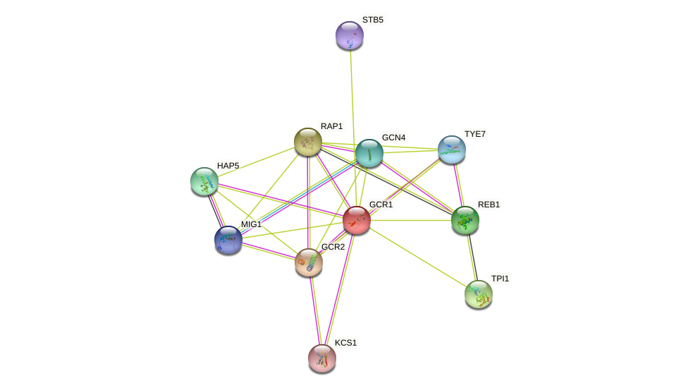 GCR1 protein (Saccharomyces cerevisiae) - STRING interaction network