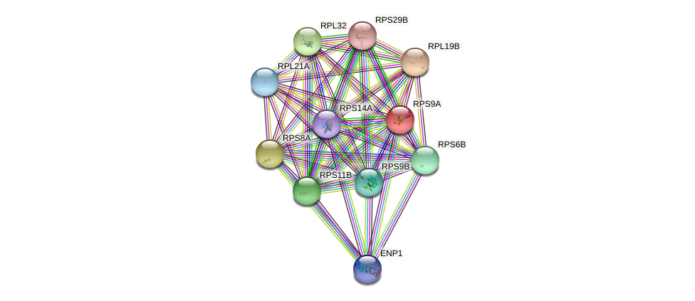 RPS9A protein (Saccharomyces cerevisiae) - STRING interaction network
