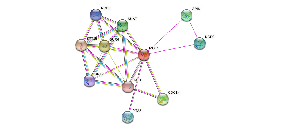 MOT1 protein (Saccharomyces cerevisiae) - STRING interaction network