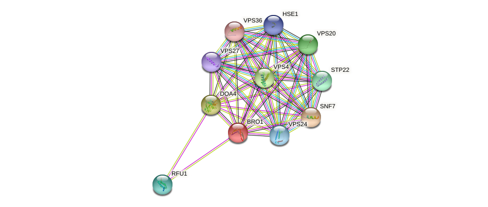 BRO1 protein (Saccharomyces cerevisiae) - STRING interaction network