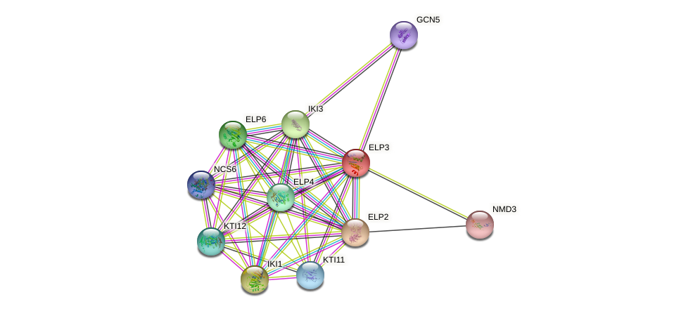 ELP3 protein (Saccharomyces cerevisiae) - STRING interaction network