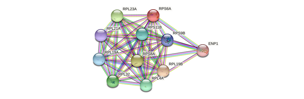 RPS6A protein (Saccharomyces cerevisiae) - STRING interaction network