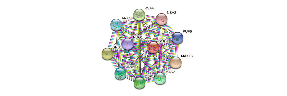 NOG1 protein (Saccharomyces cerevisiae) - STRING interaction network