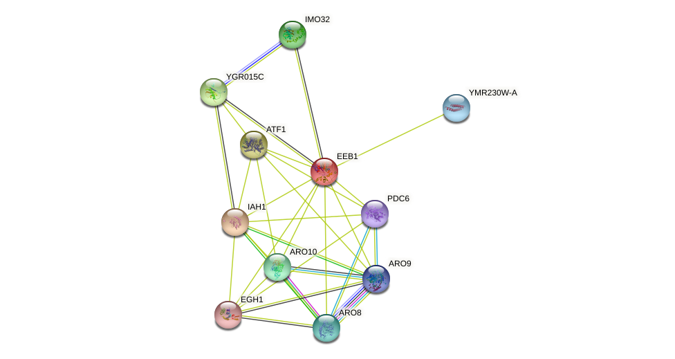 EEB1 protein (Saccharomyces cerevisiae) - STRING interaction network