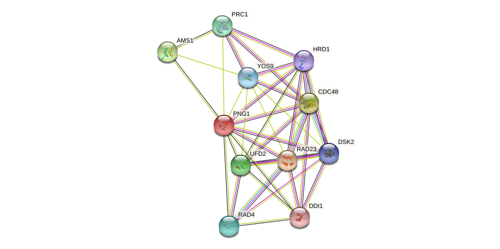 PNG1 protein (Saccharomyces cerevisiae) - STRING interaction network