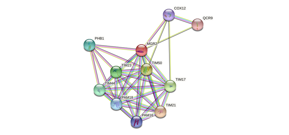 MGR2 protein (Saccharomyces cerevisiae) - STRING interaction network