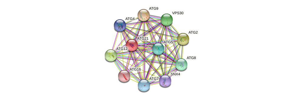 ATG21 protein (Saccharomyces cerevisiae) - STRING interaction network