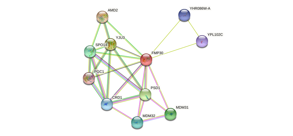 FMP30 protein (Saccharomyces cerevisiae) - STRING interaction network