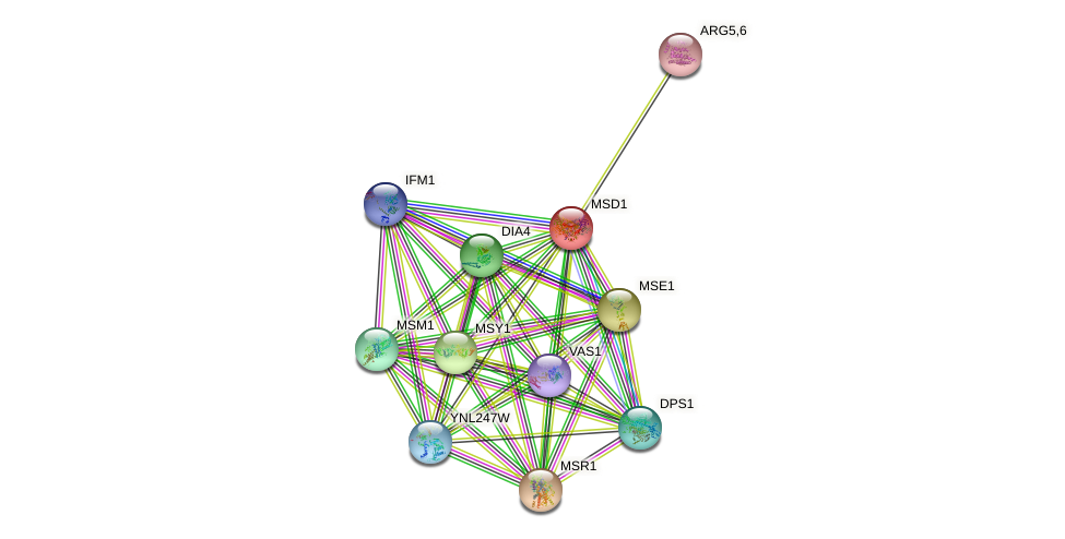 MSD1 protein (Saccharomyces cerevisiae) - STRING interaction network