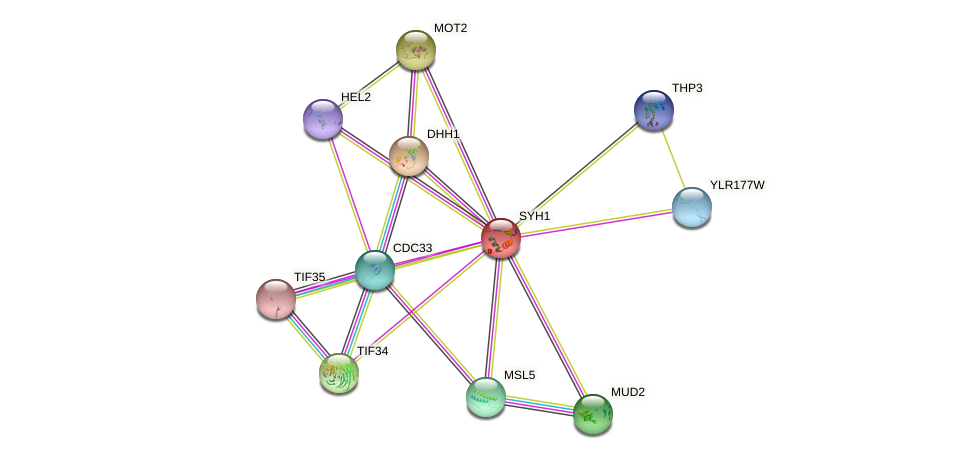SYH1 protein (Saccharomyces cerevisiae) - STRING interaction network