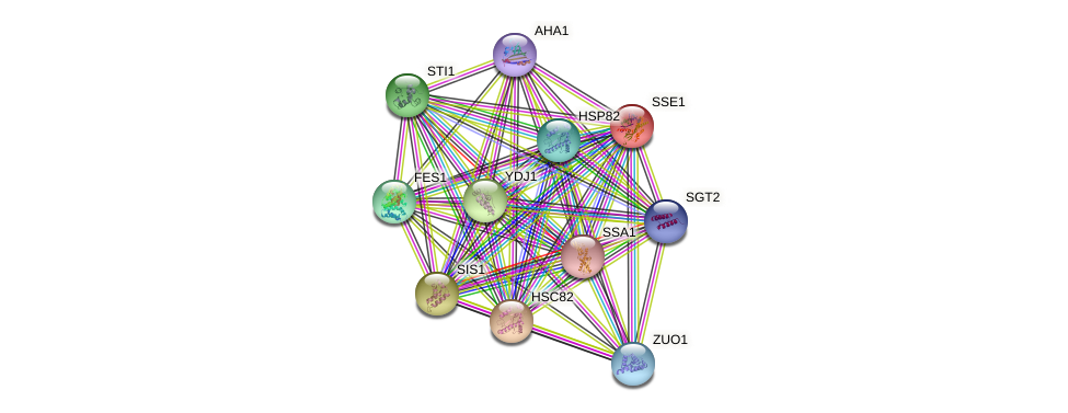 SSE1 protein (Saccharomyces cerevisiae) - STRING interaction network