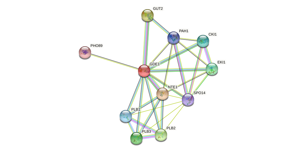 GDE1 protein (Saccharomyces cerevisiae) - STRING interaction network