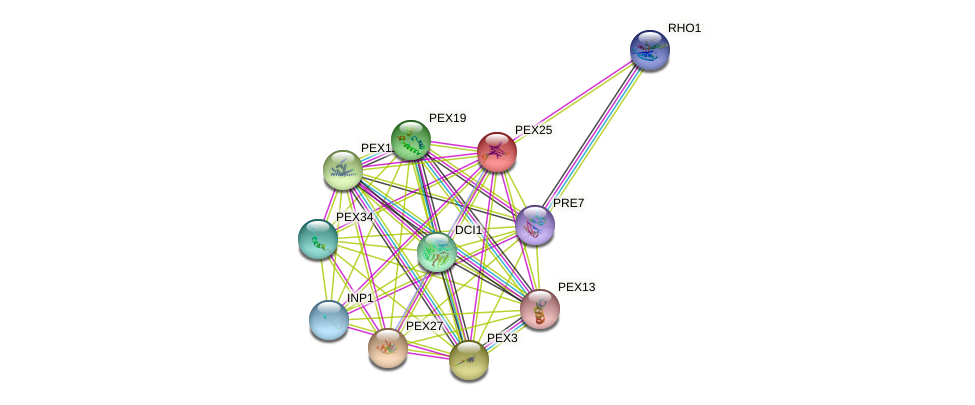 PEX25 protein (Saccharomyces cerevisiae) - STRING interaction network
