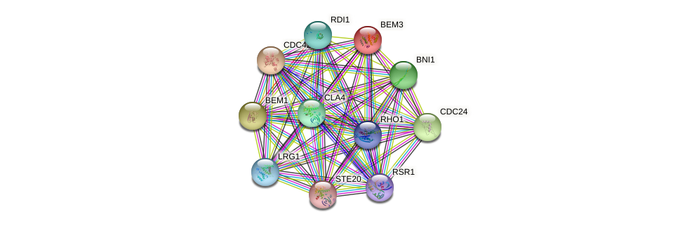 BEM3 protein (Saccharomyces cerevisiae) - STRING interaction network