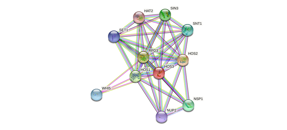 HOS3 protein (Saccharomyces cerevisiae) - STRING interaction network