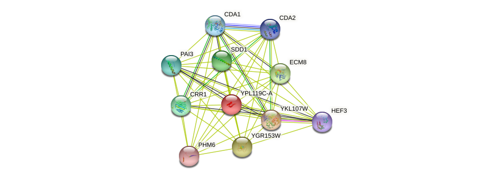 YPL119C-A protein (Saccharomyces cerevisiae) - STRING interaction network