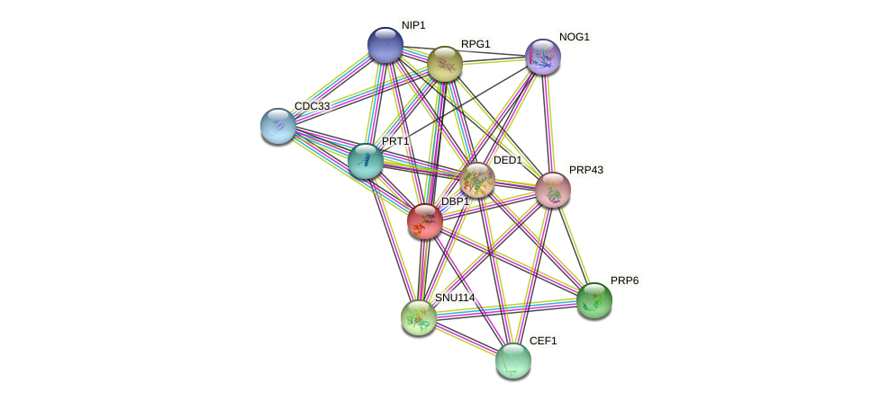 DBP1 protein (Saccharomyces cerevisiae) - STRING interaction network