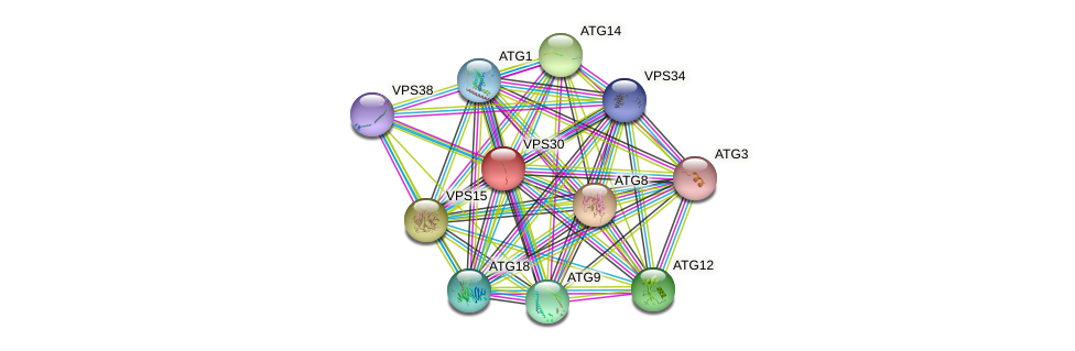 VPS30 protein (Saccharomyces cerevisiae) - STRING interaction network