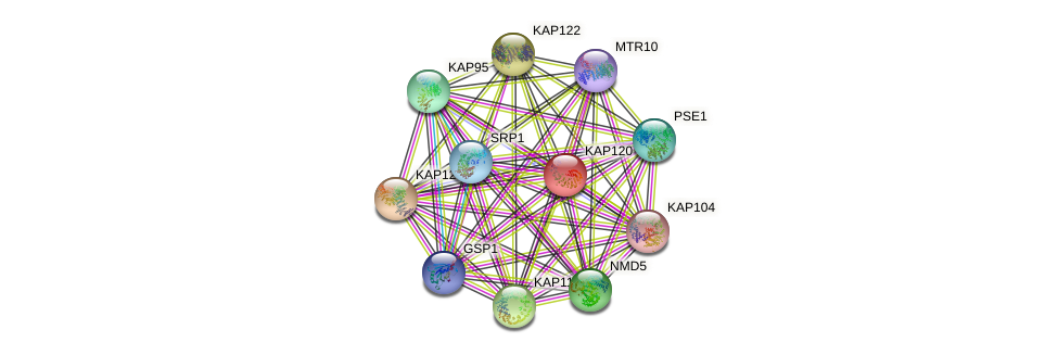 KAP120 protein (Saccharomyces cerevisiae) - STRING interaction network