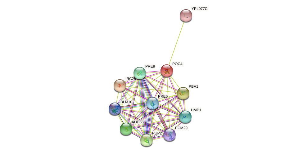 POC4 protein (Saccharomyces cerevisiae) - STRING interaction network