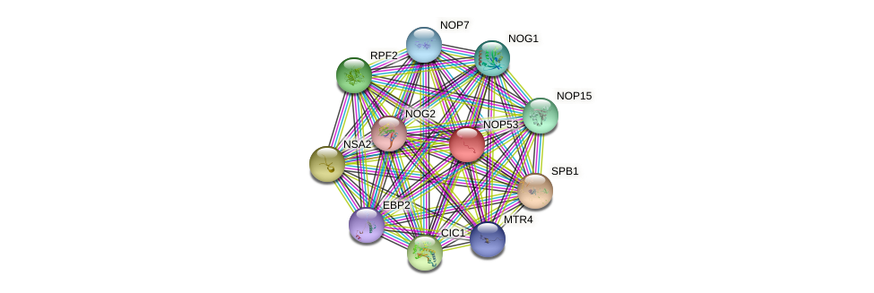 NOP53 protein (Saccharomyces cerevisiae) - STRING interaction network