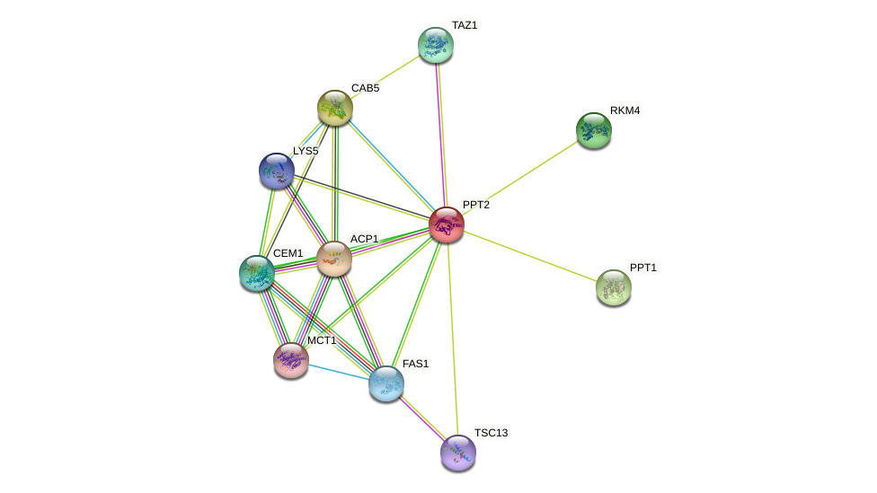 PPT2 protein (Saccharomyces cerevisiae) - STRING interaction network