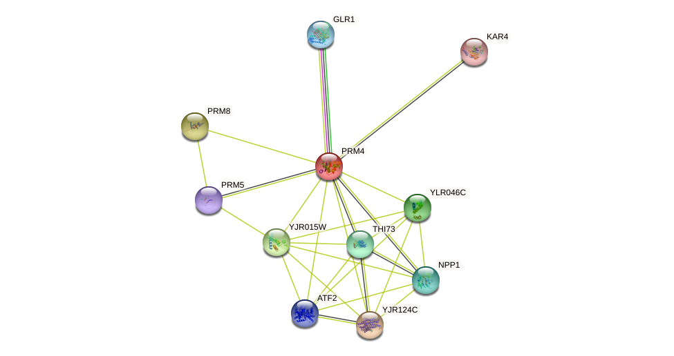 PRM4 protein (Saccharomyces cerevisiae) - STRING interaction network