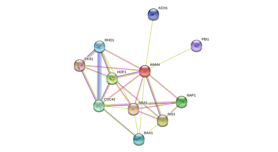 AIM44 protein (Saccharomyces cerevisiae) - STRING interaction network