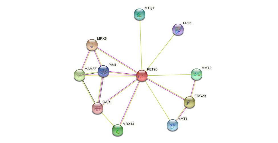 PET20 protein (Saccharomyces cerevisiae) - STRING interaction network