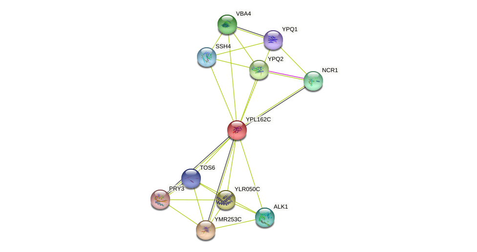 YPL162C protein (Saccharomyces cerevisiae) - STRING interaction network