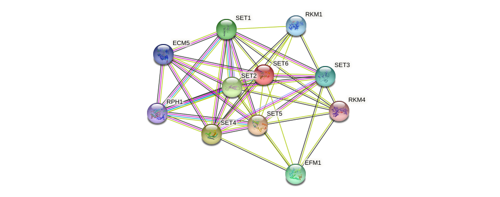 SET6 protein (Saccharomyces cerevisiae) - STRING interaction network
