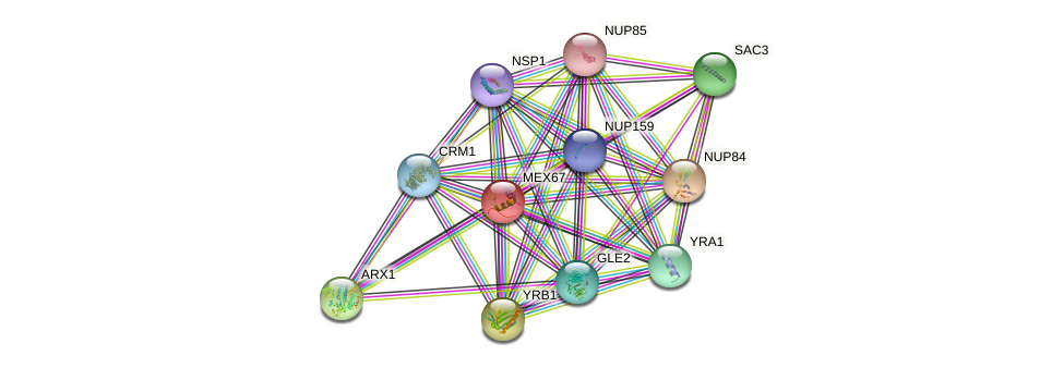 MEX67 protein (Saccharomyces cerevisiae) - STRING interaction network