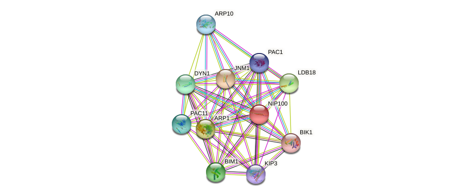 NIP100 protein (Saccharomyces cerevisiae) - STRING interaction network