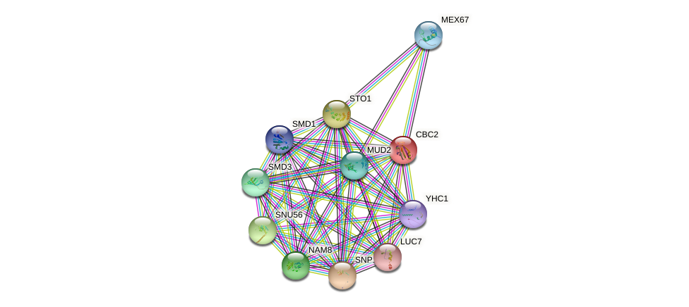 CBC2 protein (Saccharomyces cerevisiae) - STRING interaction network