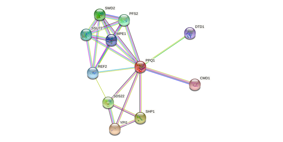 PPQ1 protein (Saccharomyces cerevisiae) - STRING interaction network
