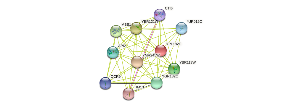 YPL182C protein (Saccharomyces cerevisiae) - STRING interaction network