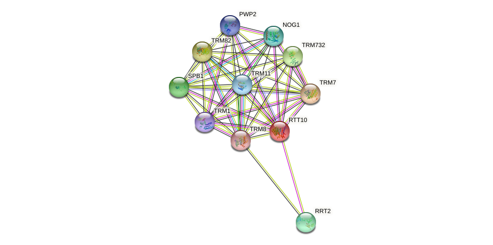 RTT10 protein (Saccharomyces cerevisiae) - STRING interaction network