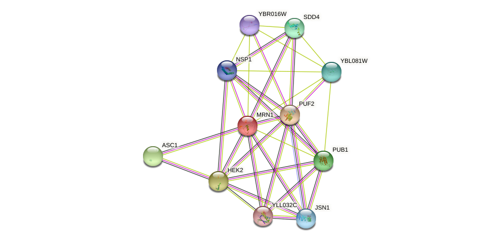 MRN1 protein (Saccharomyces cerevisiae) - STRING interaction network