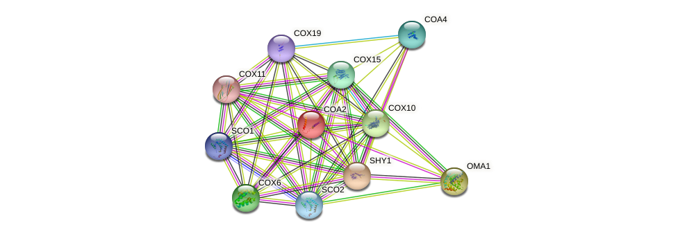 COA2 protein (Saccharomyces cerevisiae) - STRING interaction network