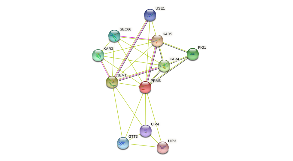 PRM3 protein (Saccharomyces cerevisiae) - STRING interaction network