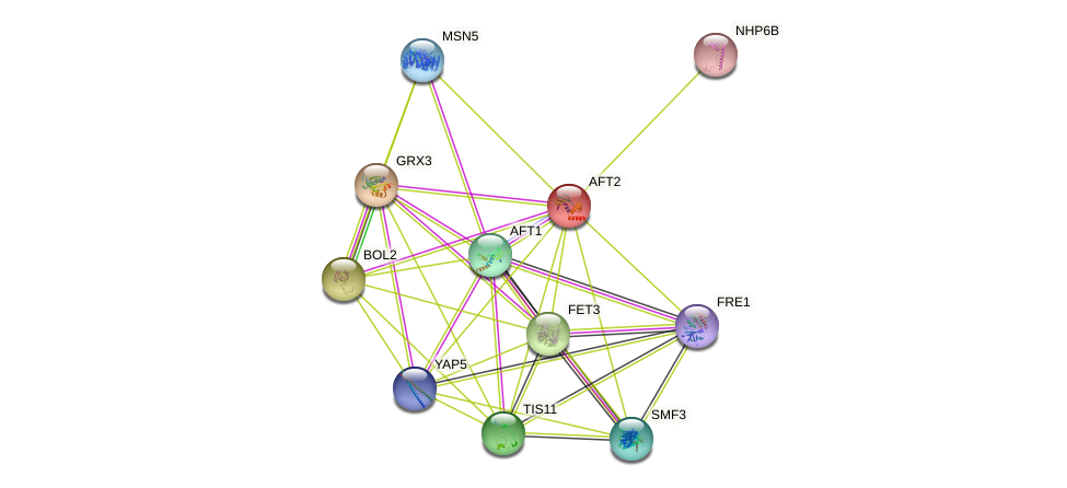 AFT2 protein (Saccharomyces cerevisiae) - STRING interaction network
