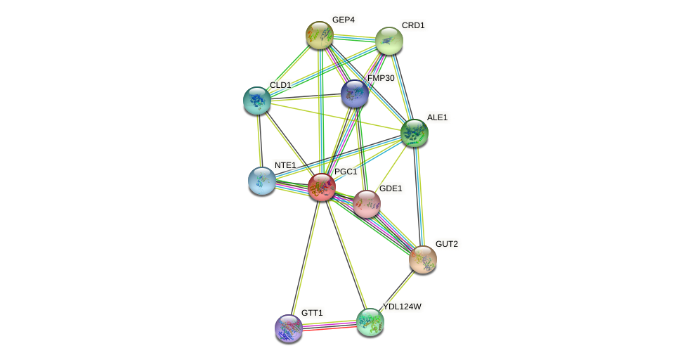 PGC1 protein (Saccharomyces cerevisiae) - STRING interaction network