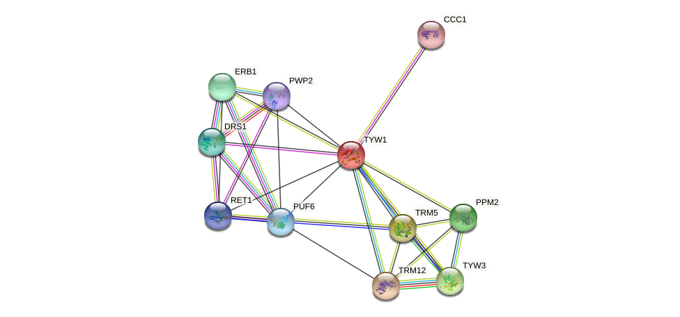 TYW1 protein (Saccharomyces cerevisiae) - STRING interaction network